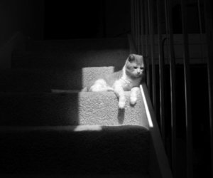 b&w, carpet, and kitties image