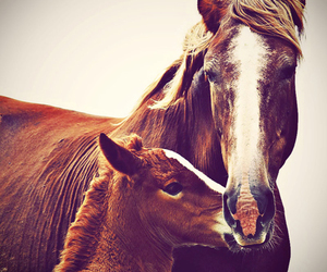 horse, mother, and photography image