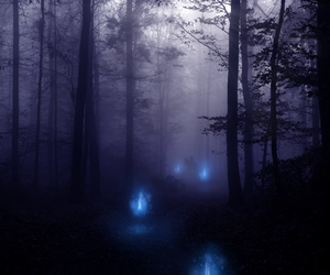 blue, forest, and night image