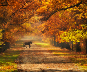 fall and cute image