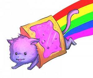 cat, rainbow, and nyan cat image