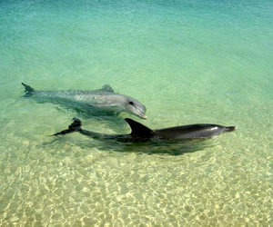 delfin, inspiration, and dolphin image