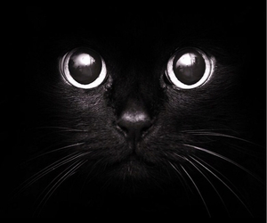 black cat image