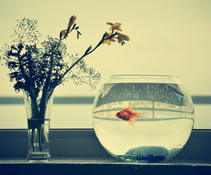 fish, flower, and photo image