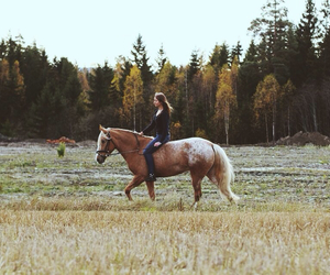 autumn, forest, and horse image