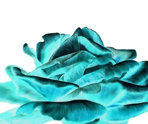 flower and turquoise image