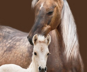 horse, foal, and mother image
