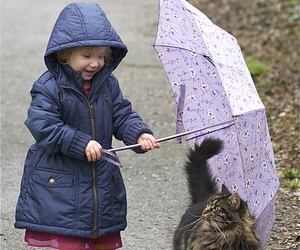 cat, rainy, and umbrella image
