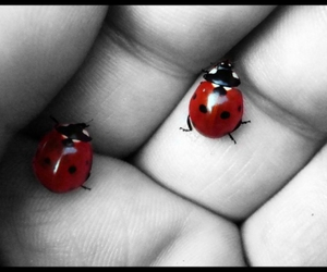 ladybug, photography, and separate with comma image