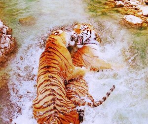 animals, beautiful, and colour image