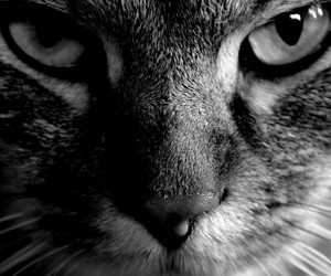 animal, cat, and face image