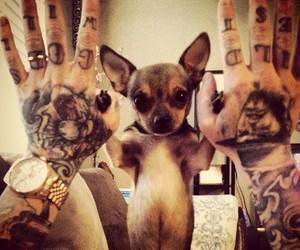 tattoo, dog, and cute image