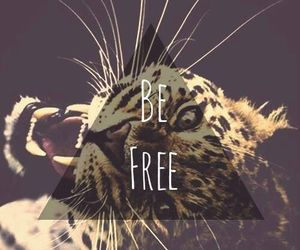 free, tiger, and be free image