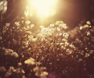 flowers and light image