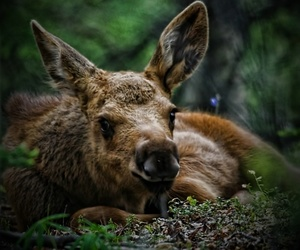 deer and nature image