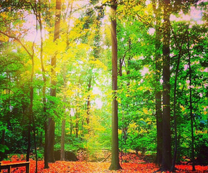 autumn, light, and lovely image