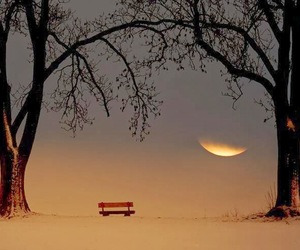 moon, tree, and landscape image