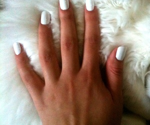 cat, nails, and withe image