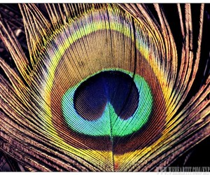 bird, colors, and eye image