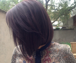 shorthair and short hair red brown dark image