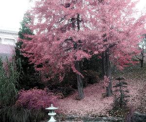 beautiful, japan, and nature image