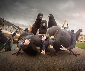 birds, gang, and pigeons image