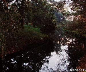 autumn, lago, and tree image