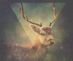deer, triangle, and hipster image