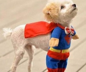 dog, superman, and puppy image