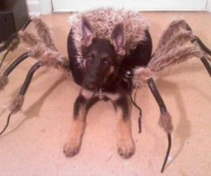 dog, Halloween, and spider image