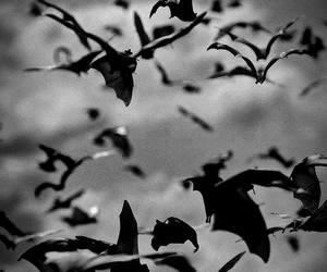 bats, bat, and animal image