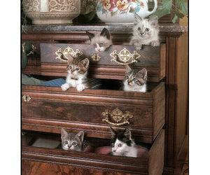 kittens and dresser drawers image