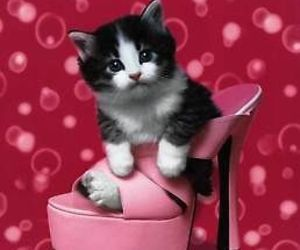 kitten, pink, and shoe image