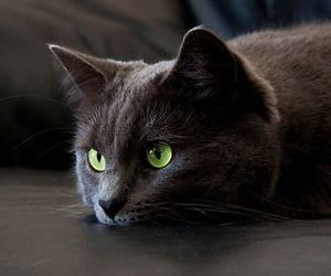 black, cat, and resting image
