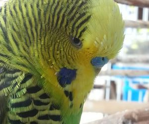 bird, budgie, and green image