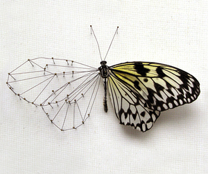 butterfly, art, and animal image