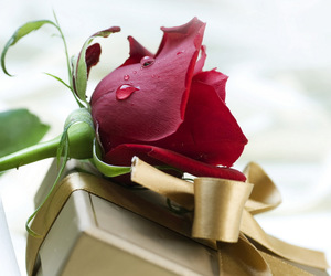 gift and rose image