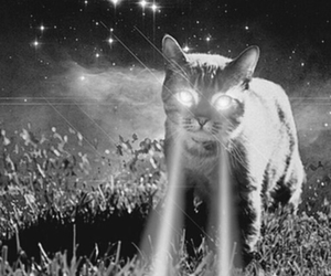 cat, laser, and black and white image