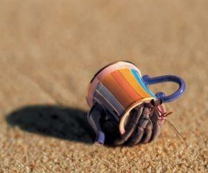 beach, crab, and rainbow image