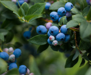 berries, fruit, and blueberries image