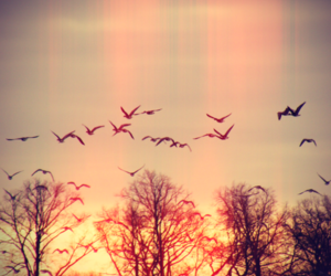 birds, heart, and free image