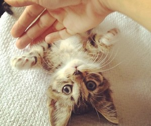 cat, miauw, and cute image