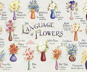flowers and language image