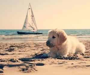 cute, beach, and dog image