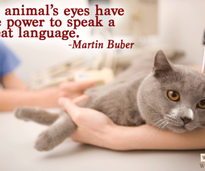 animals, cat, and eyes image