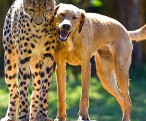 dog, leopard, and friends image