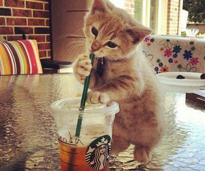 adorable, drink, and kitty cat image