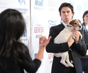 ian somerhalder, dog, and damon image