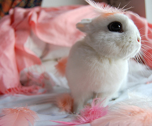 bunny, feather, and feathers image