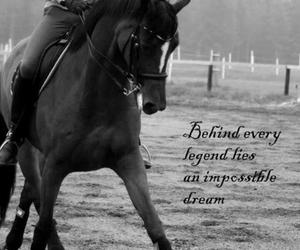 dressage, horse, and quotes image